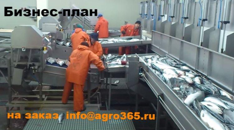 Бизнес-план Мурманск