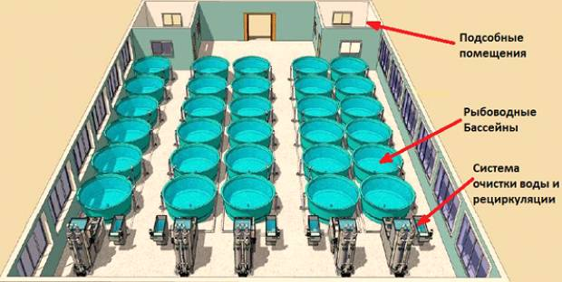 Схема оборудования УЗВ для выращивания рыбы