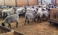 разработка бизнес-плана фермы