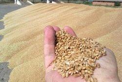 бизнес-план переработки зерновых и масличных