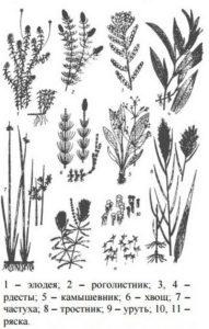 растения, которые едят раки