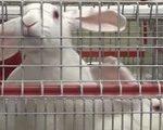 план разведения кроликов