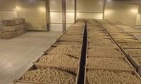 план бизнеса картофелехранилища