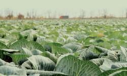 реализация плана развития бизнеса овощеводческого хозяйства