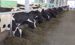 Произведен расчет плана бизнеса животноводческого комплекса в Махачкале