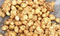 рынок картофеля 2015 и 2016 года