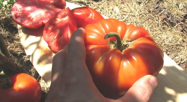 фото сорта крупных томатов