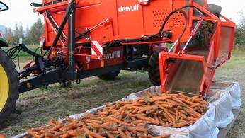 уборка моркови комбайном
