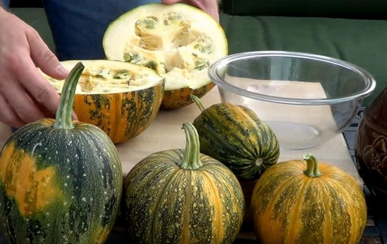 Kakai - вкусный сорт тыквы