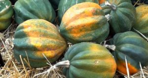 Фото сорттов тыквы и её выращивание